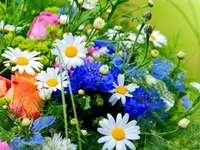 Barevné květy - Barevné květiny