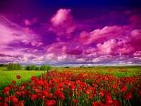 Червени макове срещу небето