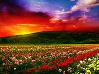Цветни рози в планината