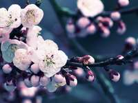 Fleurs, fleurs, bourgeons