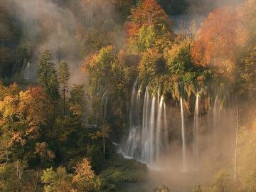 Automne et brouillard - Une forêt d'automne brumeuse