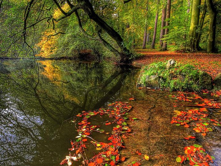 На реката през есента - Есен, брег на реката, дърво (10×10)