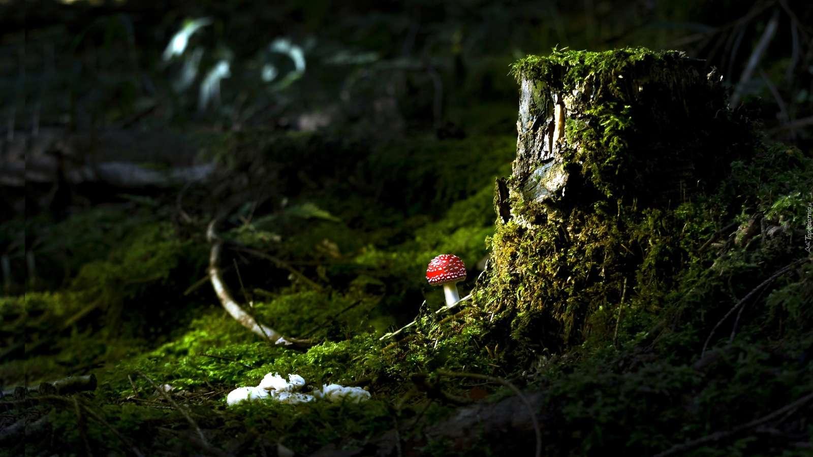 гъба - Гъба. Гълъб от мъхест багажник. Червен кадиш до ствола на дърво (9×9)