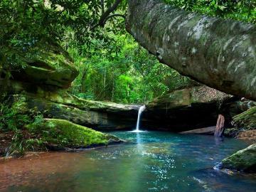 Roches et rivière - Forêt de roche de l'arbre