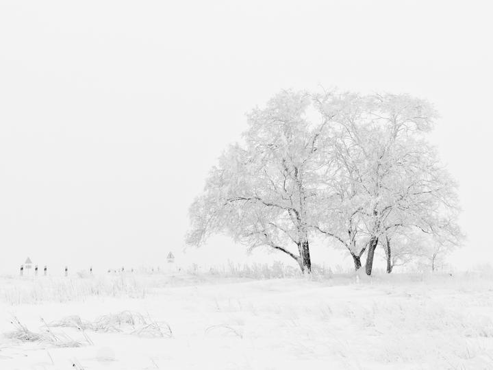 Снежна зима - Сняг, зима, дърво, студ (10×9)