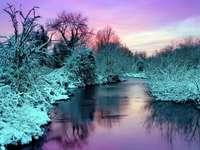 Зимни цветове