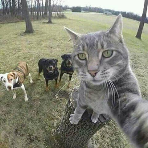 perro amigo con un gato rompecabezas