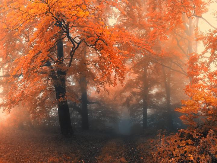Мъглива есен - есен, дървета, мъгла, настроение, портокали (8×6)
