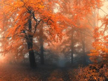 Automne brumeux - automne, arbres, brouillard, humeur, oranges