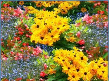 As flores mais bonitas do mundo - As flores mais bonitas do mundo