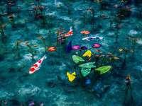 Цветя на водата