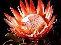 Най-красивите цветя на света