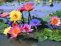 Flores flutuantes