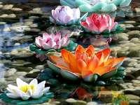 Fiori colorati galleggianti - Fiori colorati galleggianti