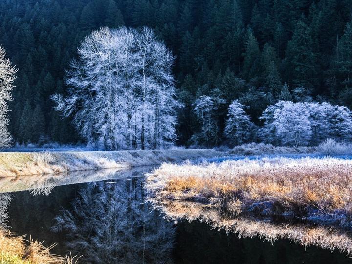 Река през зимата - Зима, река, сняг, дървета (9×10)