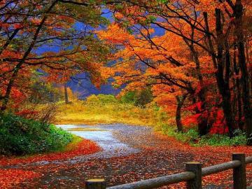 Route à l'automne - Automne, ciel orageux, route, clôture
