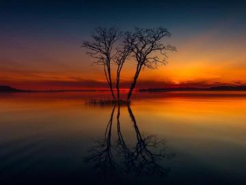 le coucher du soleil - Coucher de soleil, arbres, eau, pas de feuilles