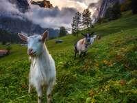 Berner Alpen, Schweiz - Berner Alpen, Schweiz
