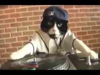 DJ cat 6789