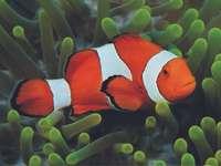 Gdzie_jest_Nemo