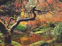 Skog på hösten - färgglada pussel