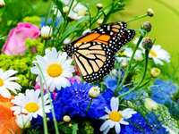 Fjärilsbesök - Odwiedziny motyla