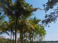 Zones humides au Sri Lanka - Zones humides au sud-est du Sri Lanka, près du parc national de Yala