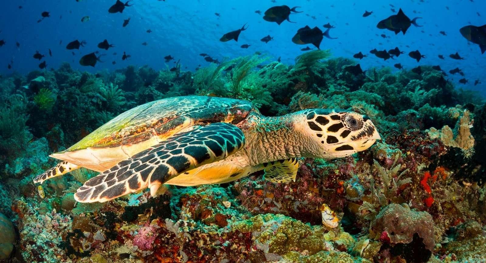 Życie oceanu