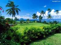 palmeiras na ilha