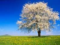 Jarní strom