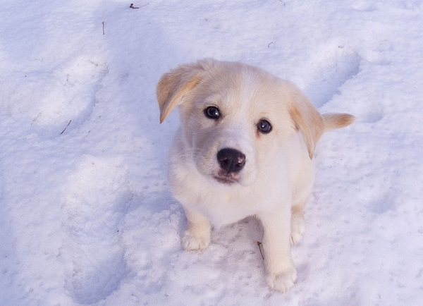 beaux animaux - petit chien mignon (5×5)