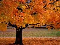 Δέντρο το φθινόπωρο