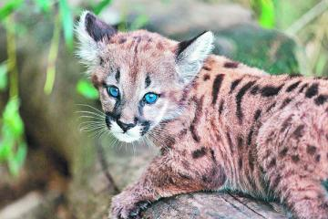 lovely animals - the cat is similar to this kind of dog