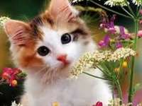 animali adorabili - gattino tra i fiori