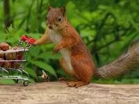 Ardilla en las compras