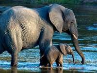 Pequeño bebé elefante