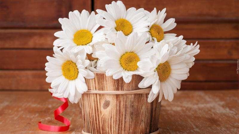 lentebloemen - madeliefjes in een houten pot (5×10)