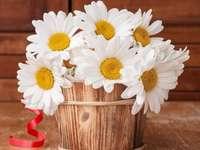 flores da primavera - margaridas em uma panela de madeira