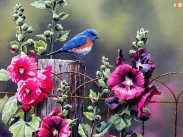 kolorowe kwiaty - ślaz na płocie i ptaku