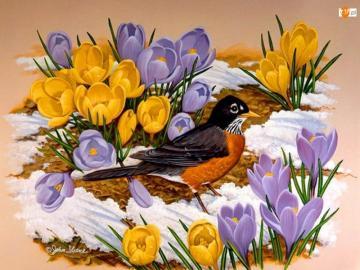 kolorowe kwiaty - żółte i niebieskie krokusy. kolorowe kwiaty