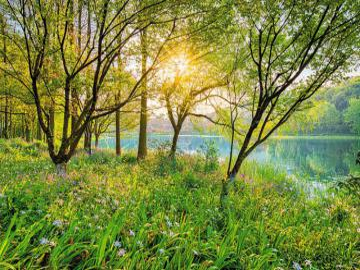 drzewka zielone - drzewa zielone sa