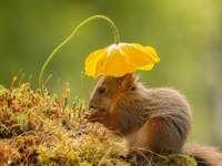 kedves állatok - virágos esernyő, és nem lesz nedves