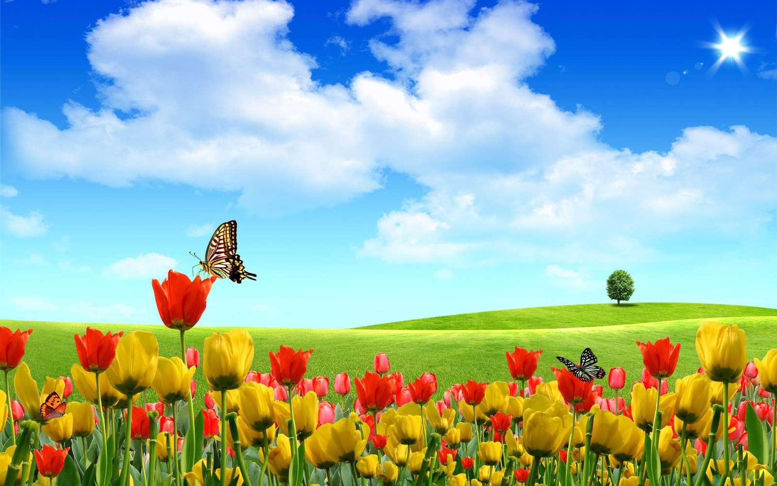 Quebra-cabeça de flores da primavera - Quebra-cabeça de primavera para crianças - Prado em flores (2×2)