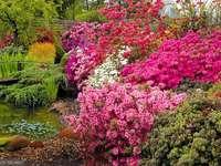 Азалии с големи цветя