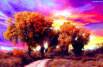 colorful trees - Colorful trees, nice views