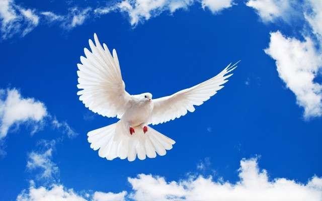 Porumbel alb - Porumbel alb în cerul albastru (5×5)