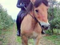 um cavalo ou um cavalo