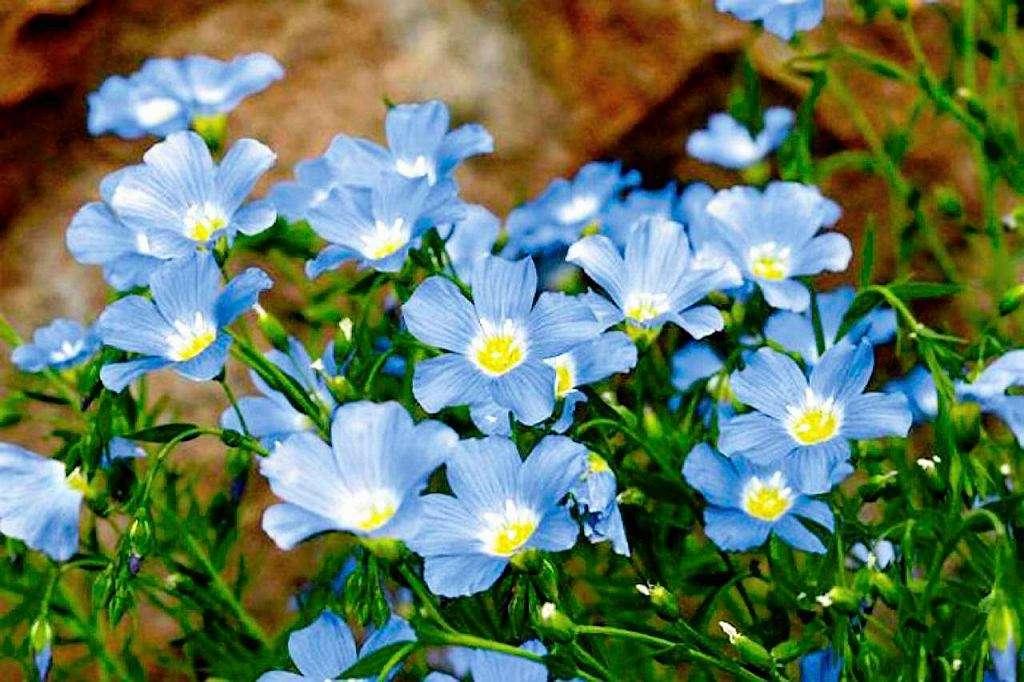 Красотата на цветята - незабравими (9×9)