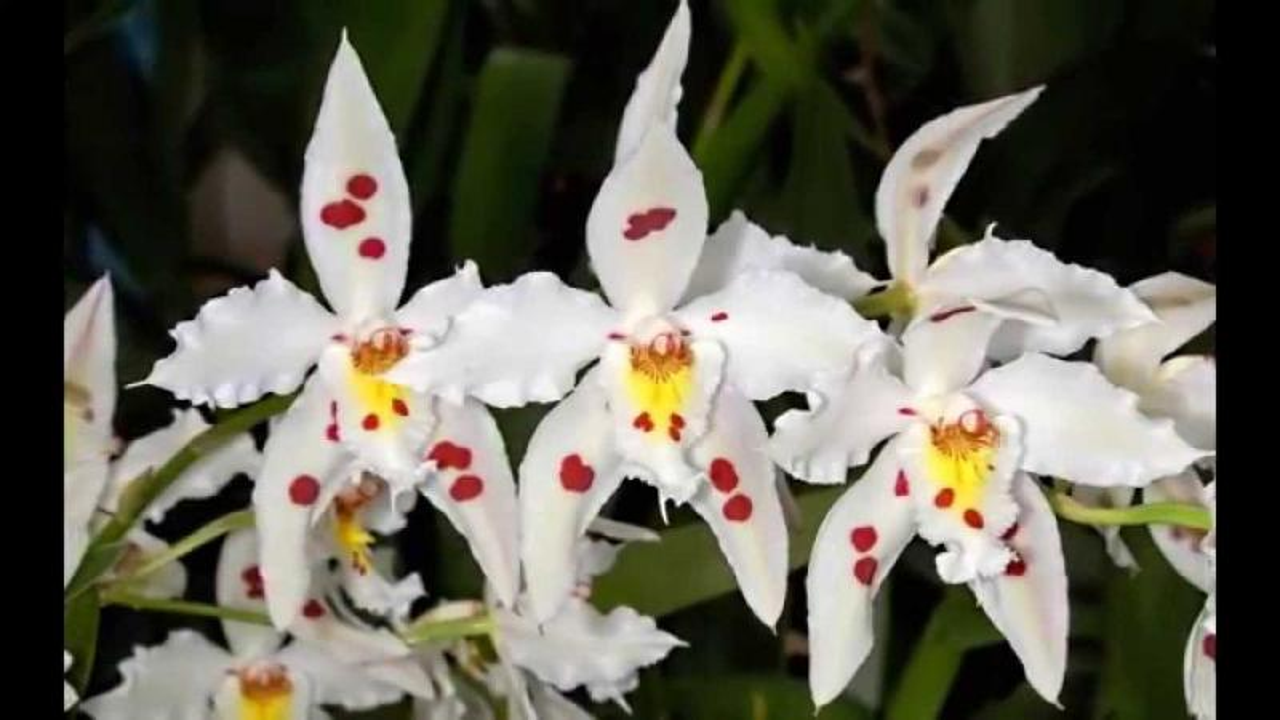 Най-красивите цветя на света - - Най-красивите цветя на света (9×9)
