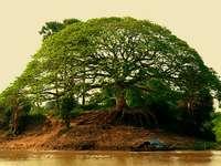 δέντρο της ζωής